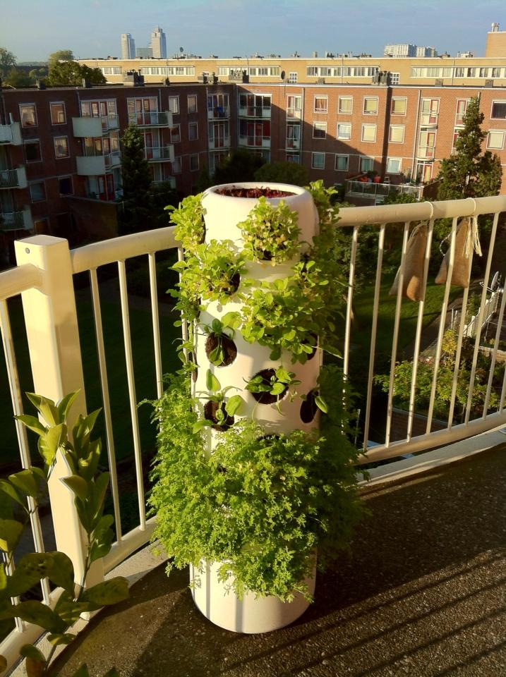winter_Vertical_garden27sep