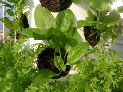 groente verticaal kweken
