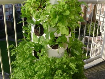 verticaal groente kweken