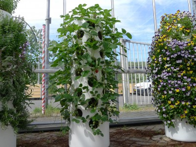 vertical urban farming