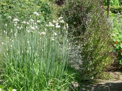 Vertical Garden Herbs